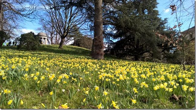 Daffodils at Kew Gardens