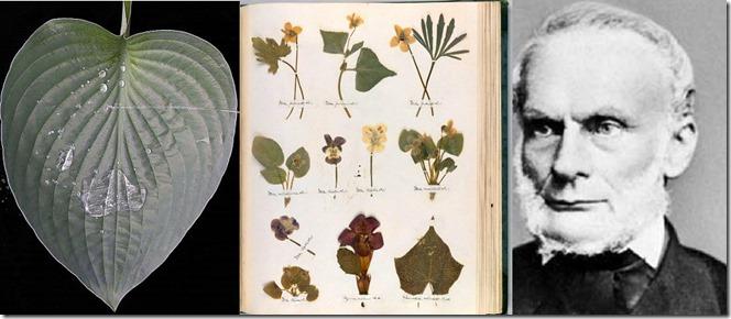 Cucticle-Herbarium-Clausius