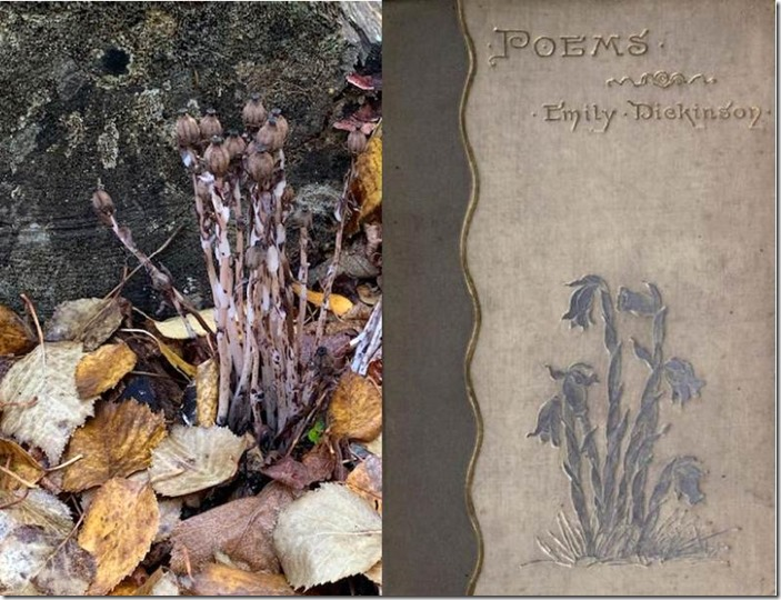 Autumn Indian Pipe and Dickinson Poems cover
