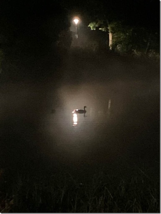 By Moonlight a Goose Can Be A Swan by Heidi Randen 1024